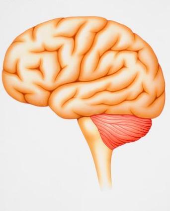 Zombie Brain Stem